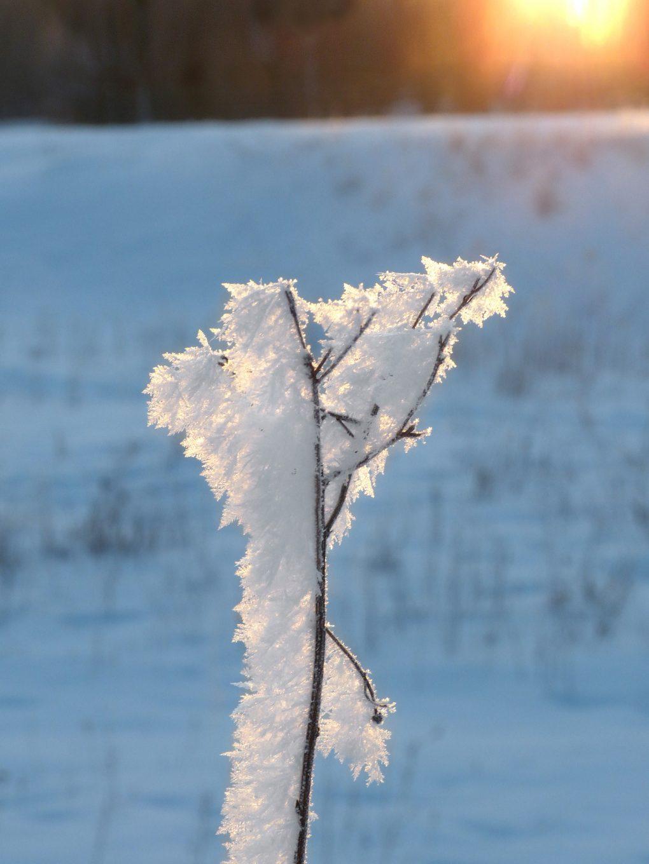 winter2019_1